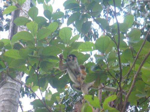 monkey at hotel3