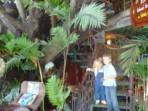 treehouse restaurant in monteverde